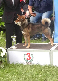 Shiba-Nippo-Dog-Show-Ring-Best-Groupe-5-Chien-primitif